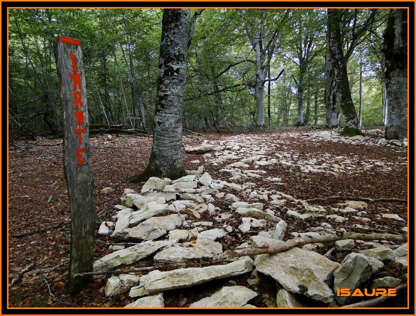 Bosque de Artea y Cueva de los Cristinos (Urbasa) DSC02723