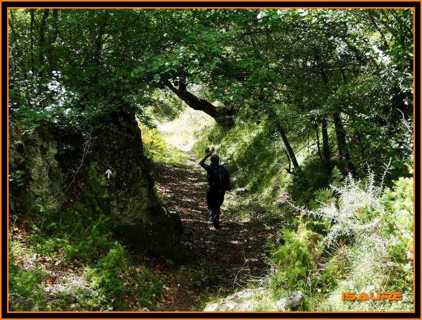 Bosque de Artea y Cueva de los Cristinos (Urbasa) DSC02726
