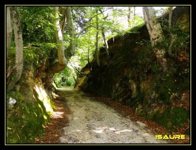 Camino de Santiago por el Norte DSC00514
