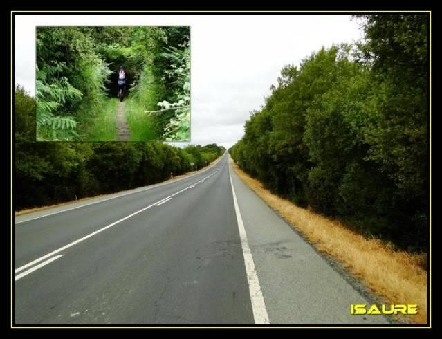 Camino de Santiago por el Norte DSC00816