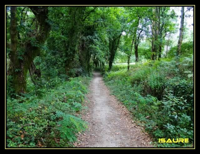 Camino de Santiago por el Norte DSC00921