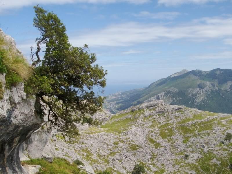 Monte Candina 489m. y Salpico 486m. desde Sonabia CANDINA109