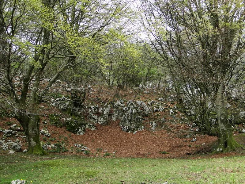 Pico Cerredo 643m. desde Cerdigo DSC00786