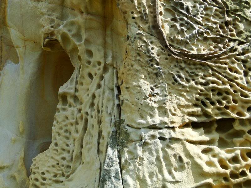 Getxo-Plentzia (Acantilados de la Galea) DSC09137