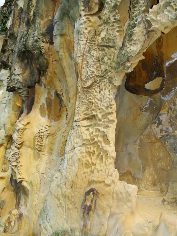 Getxo-Plentzia (Acantilados de la Galea) DSC09140