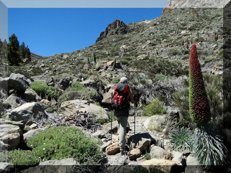 Montaña Guajara 2.718m. (Tenerife) 100