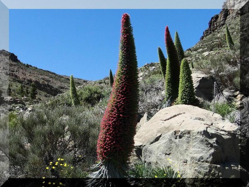 Montaña Guajara 2.718m. (Tenerife) 103
