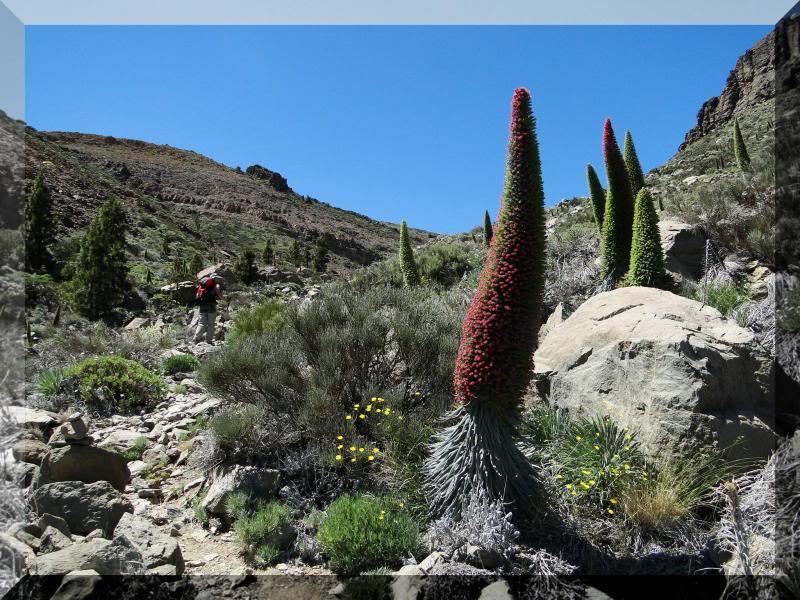 Montaña Guajara 2.718m. (Tenerife) 104