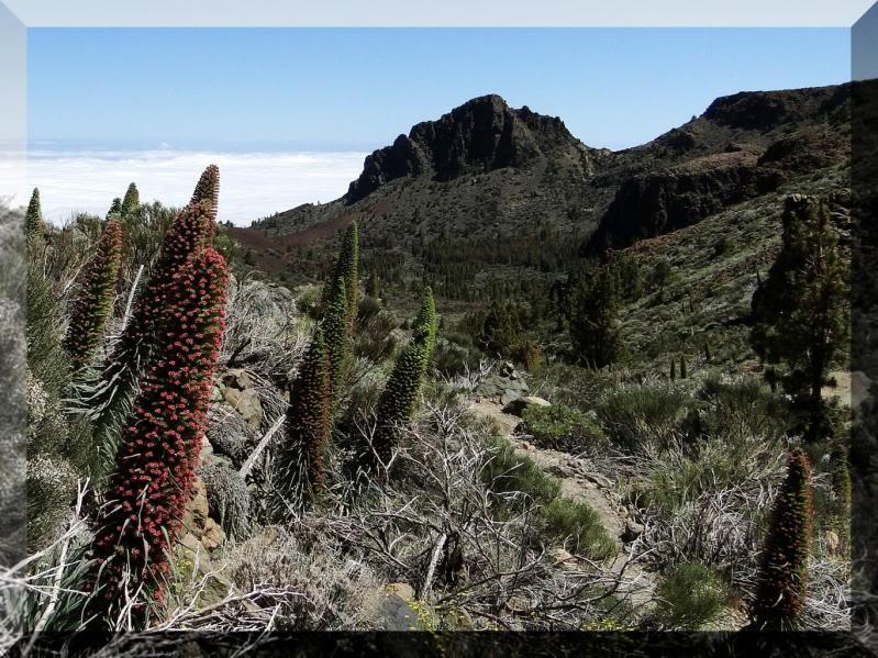 Montaña Guajara 2.718m. (Tenerife) 106