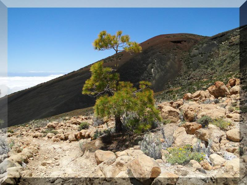 Montaña Guajara 2.718m. (Tenerife) 59
