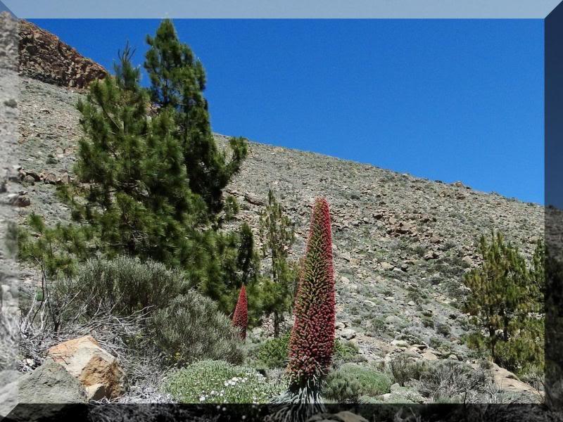 Montaña Guajara 2.718m. (Tenerife) 96