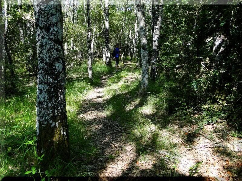 Muela 1.055m. y Gaztelua 867m. por caminos poco conocidos DSC02054
