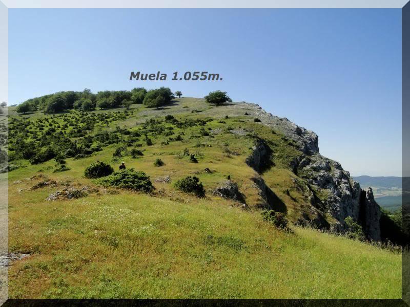 Muela 1.055m. y Gaztelua 867m. por caminos poco conocidos DSC02071
