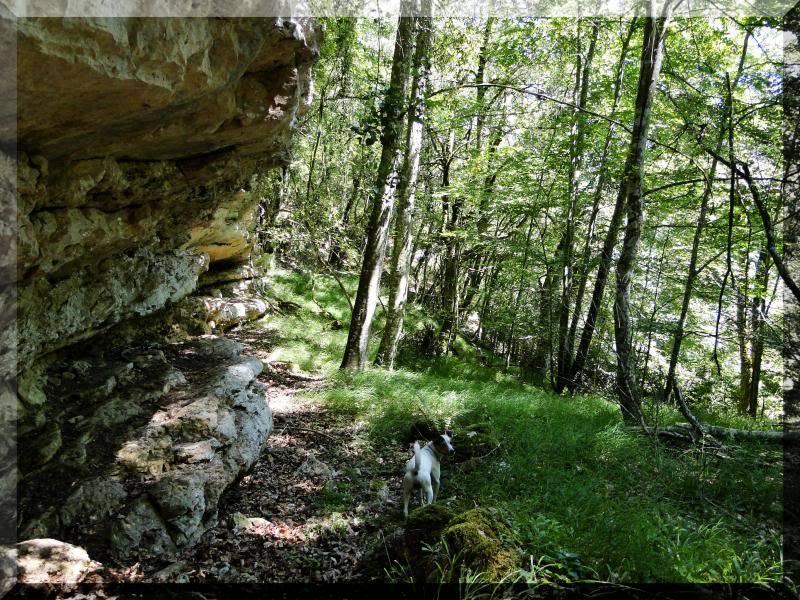 Muela 1.055m. y Gaztelua 867m. por caminos poco conocidos DSC02126