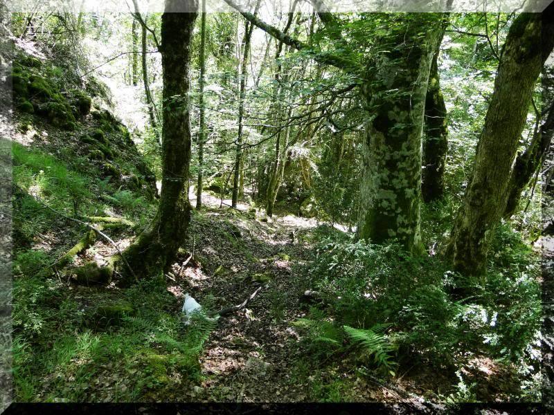 Muela 1.055m. y Gaztelua 867m. por caminos poco conocidos DSC02129