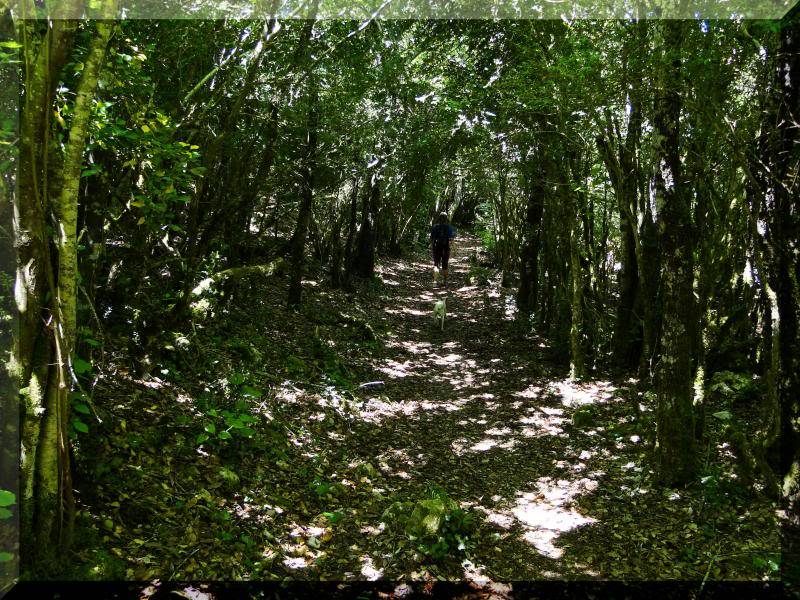 Muela 1.055m. y Gaztelua 867m. por caminos poco conocidos DSC02164
