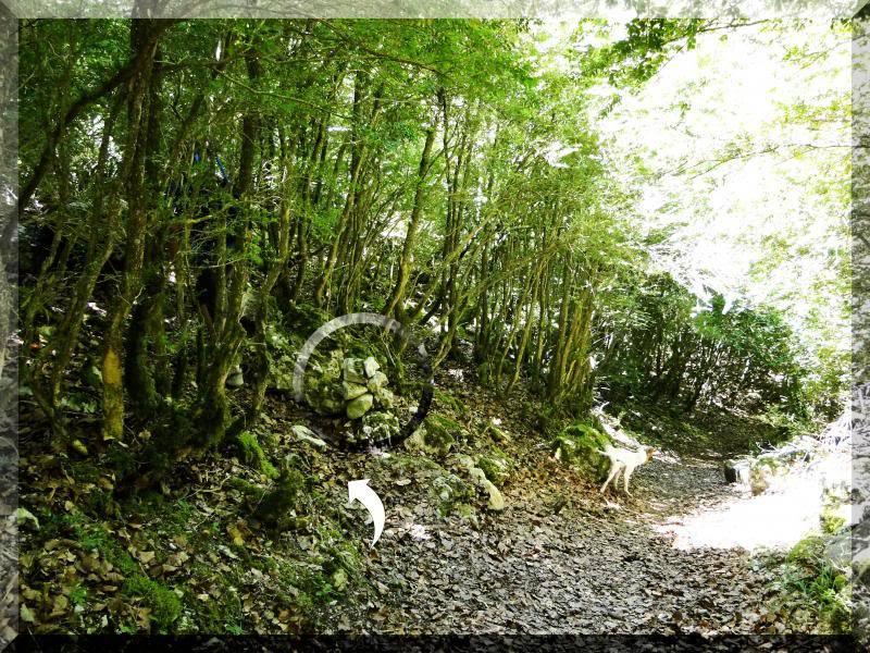 Muela 1.055m. y Gaztelua 867m. por caminos poco conocidos DSC02165
