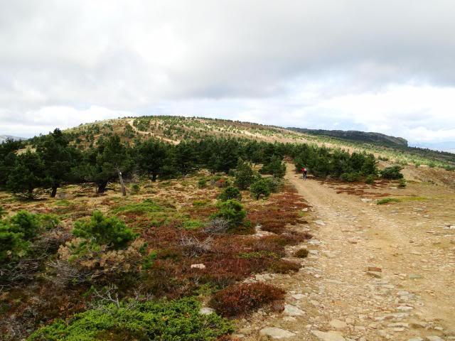 Pico Buey 2.034m. desde Villoslada de Cameros DSC05956