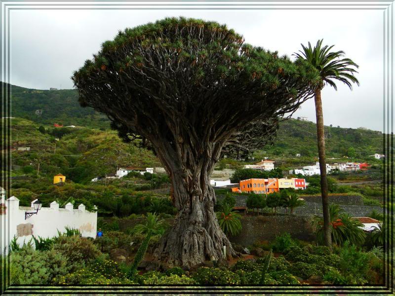 Pico Viejo 3.134m. (Tenerife) 89-1