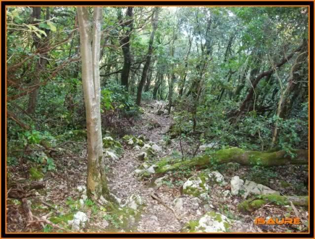 (Ogoño) Atxukulu 305m. Talaia 276m. desde Elantxobe OGOO043