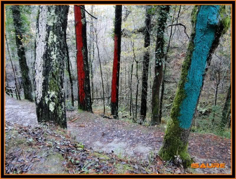 Ereñozar 448m. y Bosque Pintado de Oma DSC09851