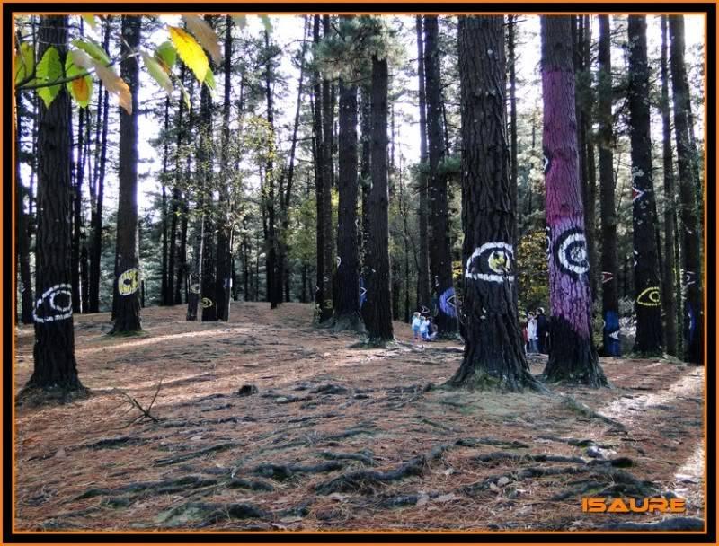 Ereñozar 448m. y Bosque Pintado de Oma DSC09857