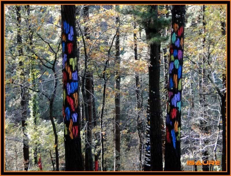 Ereñozar 448m. y Bosque Pintado de Oma DSC09861