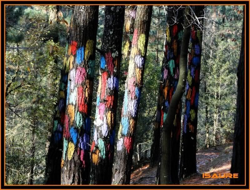 Ereñozar 448m. y Bosque Pintado de Oma DSC09866