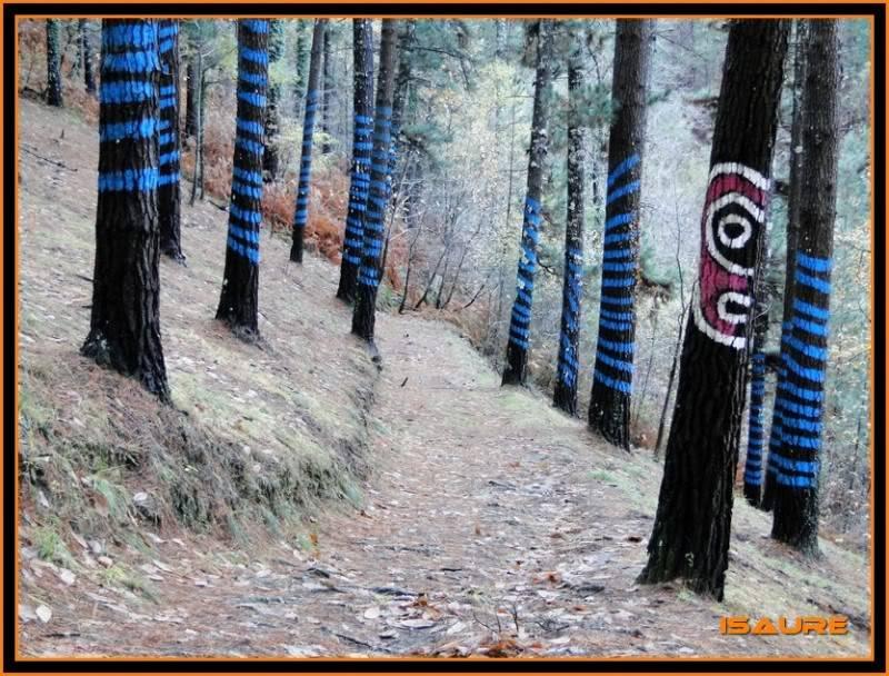 Ereñozar 448m. y Bosque Pintado de Oma DSC09869
