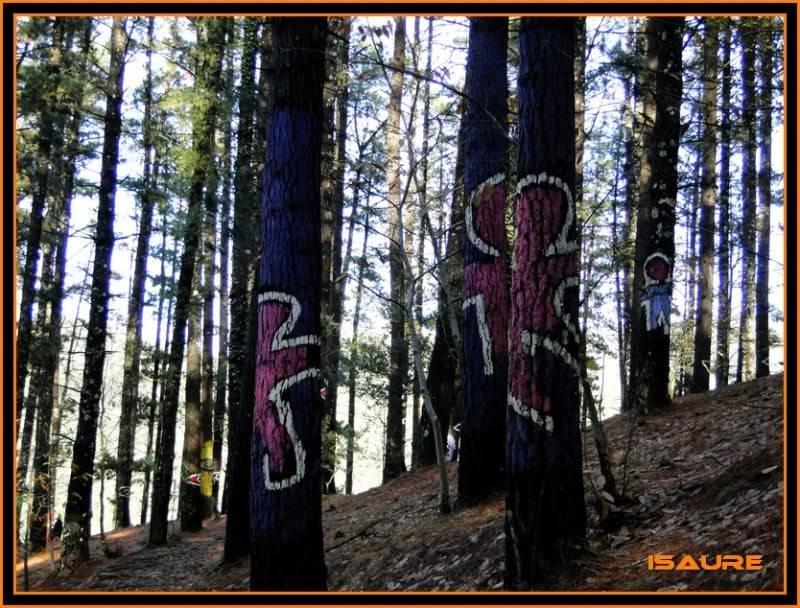 Ereñozar 448m. y Bosque Pintado de Oma DSC09874