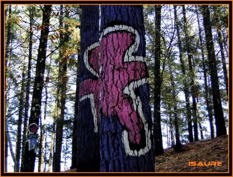 Ereñozar 448m. y Bosque Pintado de Oma DSC09875