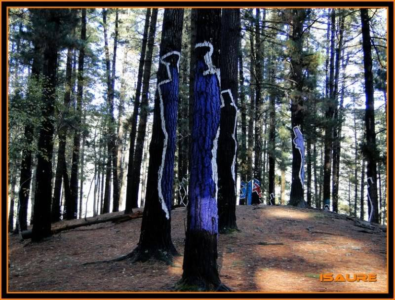 Ereñozar 448m. y Bosque Pintado de Oma DSC09881