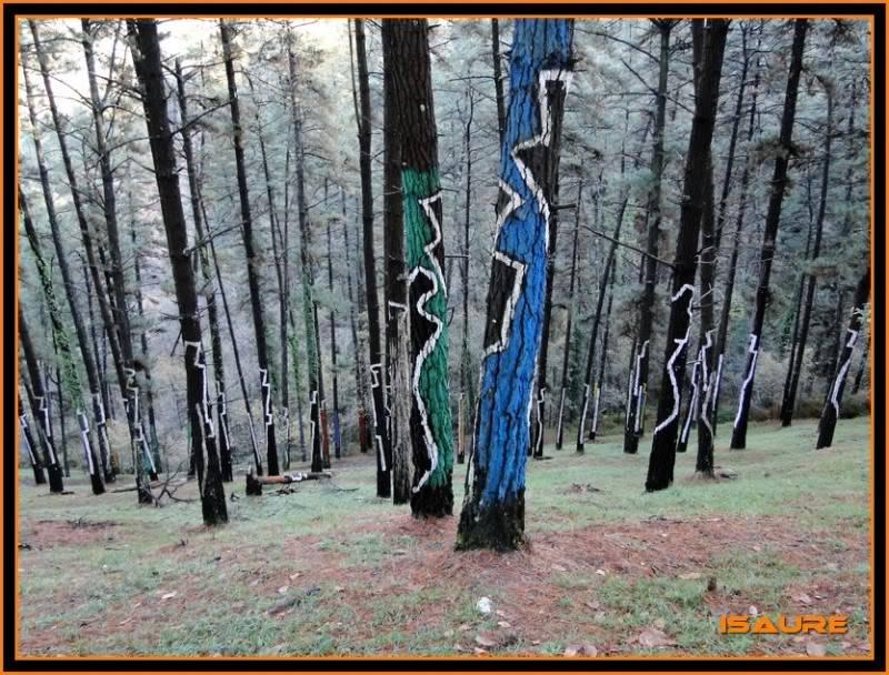 Ereñozar 448m. y Bosque Pintado de Oma DSC09886