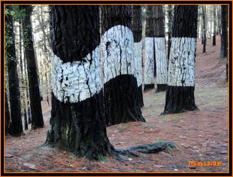 Ereñozar 448m. y Bosque Pintado de Oma DSC09891