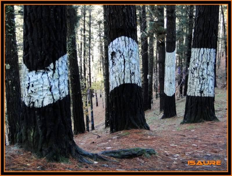 Ereñozar 448m. y Bosque Pintado de Oma DSC09892