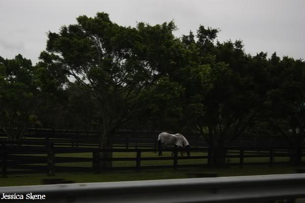 19 mars 2009, CSI 5* winter equestrian festival, west palm b IMG_3290