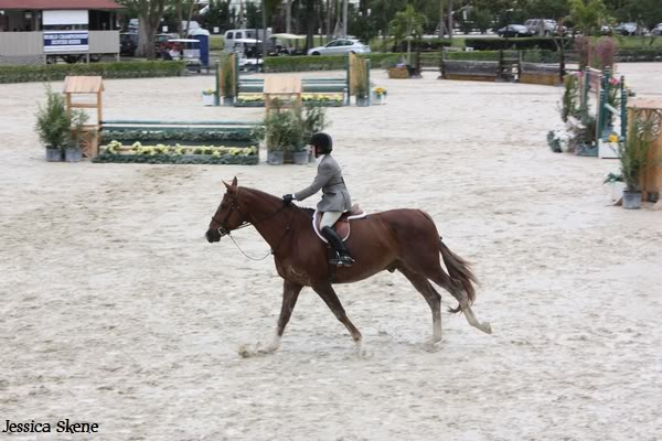 19 mars 2009, CSI 5* winter equestrian festival, west palm b IMG_3314