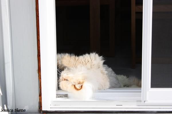 Pour les amoureux des chats IMG_4582