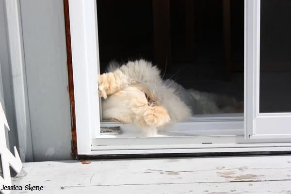 Pour les amoureux des chats IMG_4587