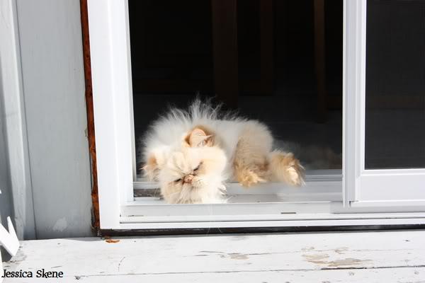 Pour les amoureux des chats IMG_4588