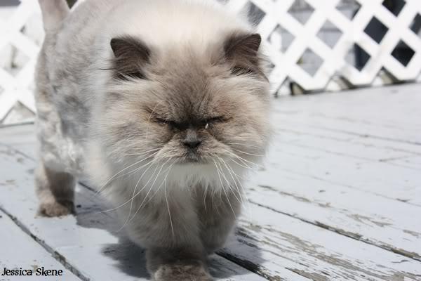 Pour les amoureux des chats IMG_4605