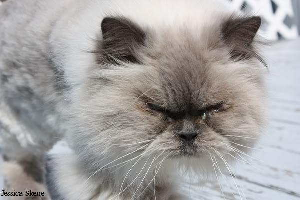 Pour les amoureux des chats IMG_4606