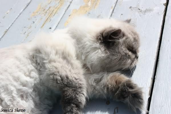 Pour les amoureux des chats IMG_4615