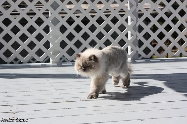 Pour les amoureux des chats IMG_4629