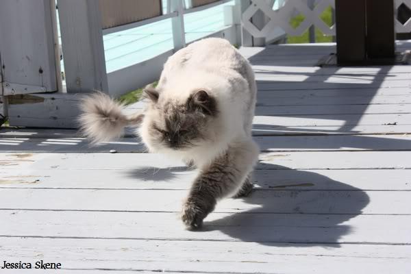 Pour les amoureux des chats IMG_4632