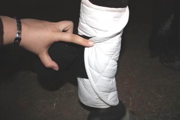 Les bandages IMG_4191