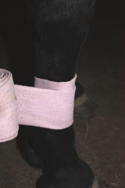 Les bandages IMG_4211