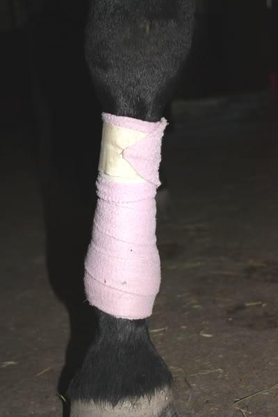 Les bandages IMG_4213