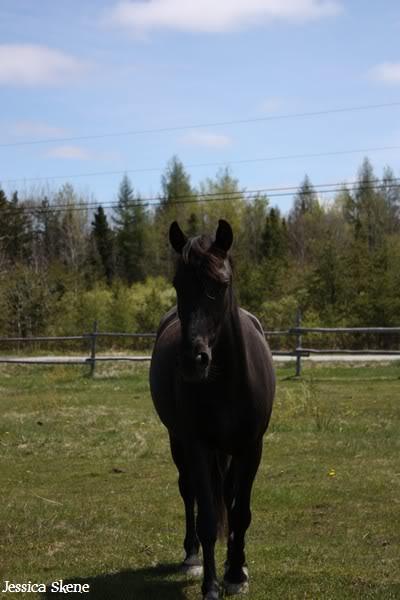 dure dure la vie de cheval IMG_5095
