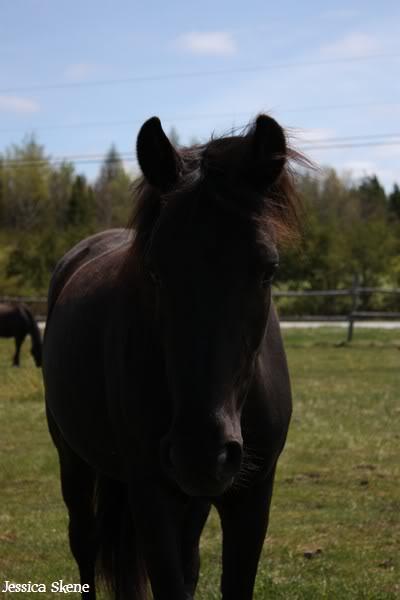 dure dure la vie de cheval IMG_5098